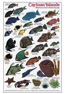 Common Fish Of The Cayman Islands