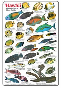 Fishes and invertebrates page for Types of fish in hawaii