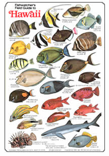 for Hawaiian fish names and pictures